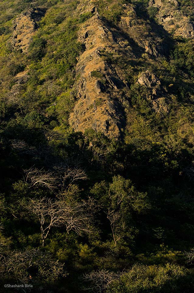 The lower reaches have patches of evergreen forest, thorn and bamboo. The rocky upper reaches seemed to constitute ideal habitat for sloth bears.