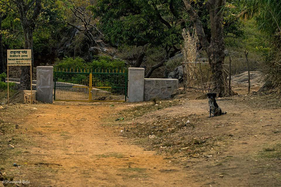 Tiger Path, Mount Abu, Rajasthan, India