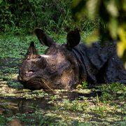 rhino stream feeding1 180x180 - Communing with Nature: BR Hills, Karnataka, India