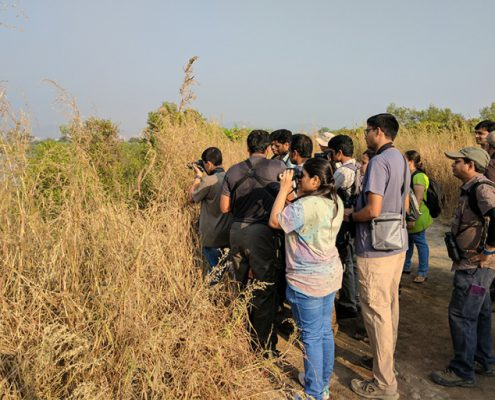 bps birding 2 1 495x400 - Mount Abu- Encounter with Big Black Baloo
