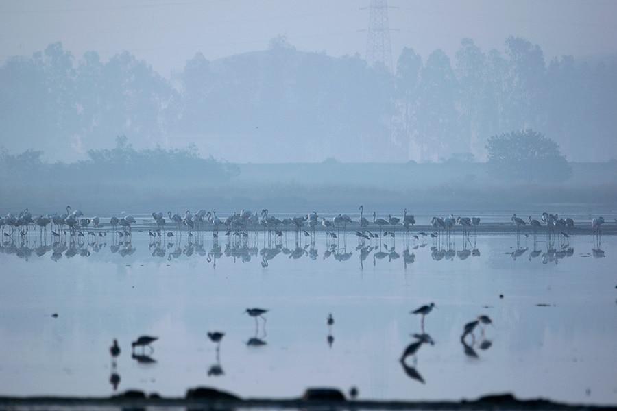 flamingoes-morning