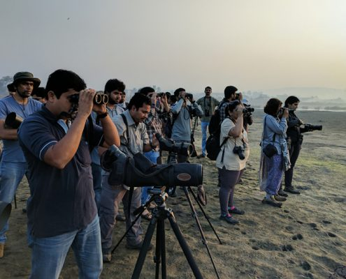 jasai birdwatching 1 495x400 - Mount Abu- Encounter with Big Black Baloo
