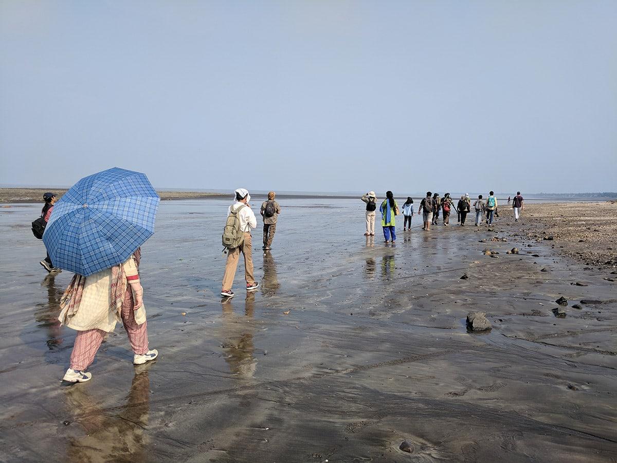 Beach Birder Line