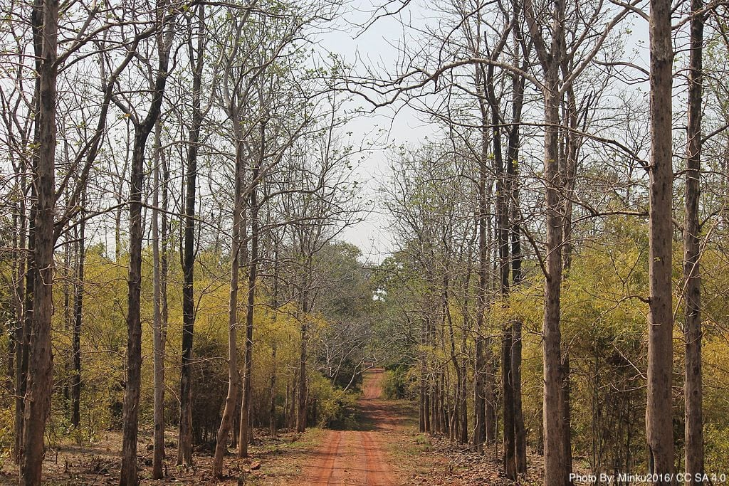 Mesmerizing Forest - Pench National Park
