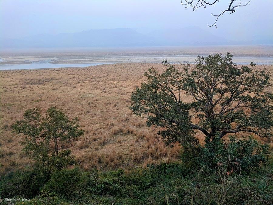 Dhikala Chaur Shashank Birla - Corbett National Park